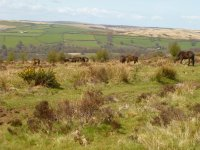 Holiday Accommodation Exmoor National Park